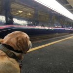 Cornwall to Harwich With A Dog