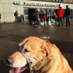 Travel from Amsterdam to Bangkok With A Dog