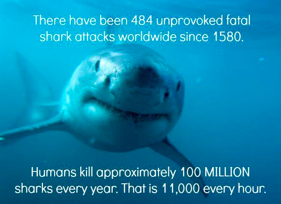 Sharks eat fish what do vegans think about sharks for Do vegetarians eat fish