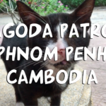 Day On Pagoda Patrol With Animal Rescue Cambodia